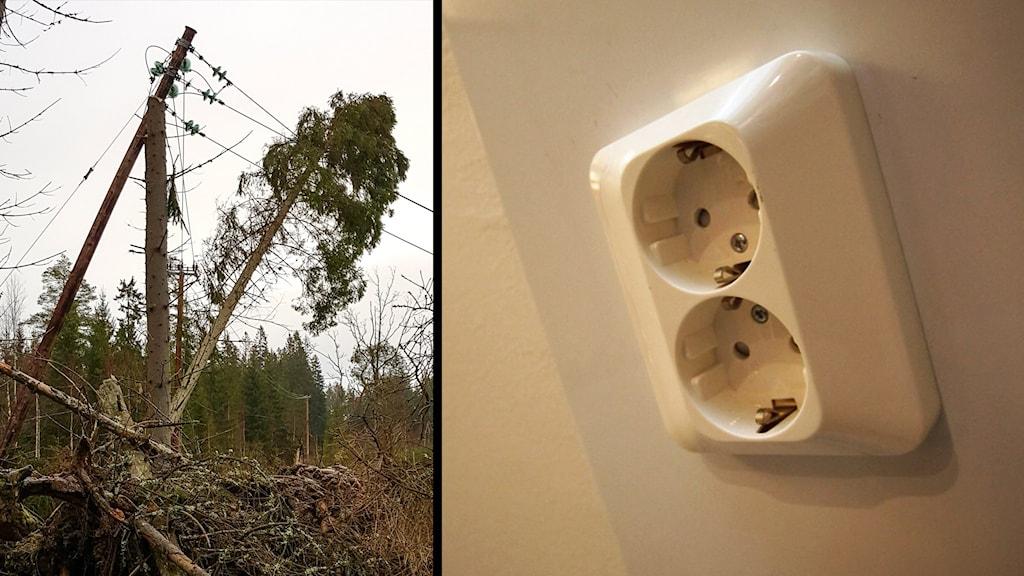 Nedfallet träd på ledning och eluttag. Foto: Mattias Karström/Pressbild Kraftringen & Nick Näslund/Sveriges Radio