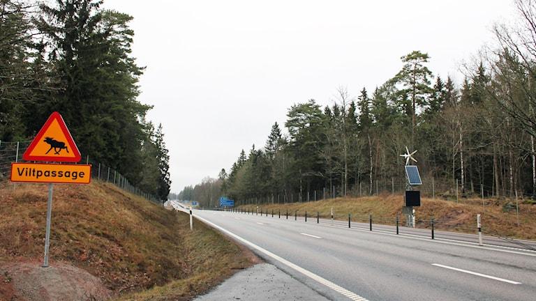 Viltpassagen vid Haraldsmåla.