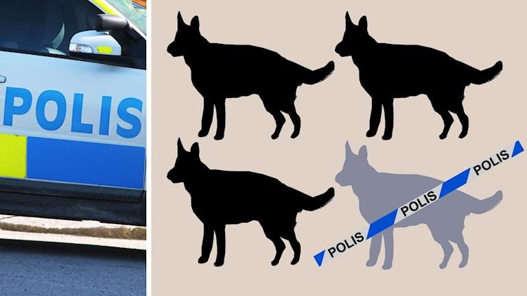 Grafik: En av fyra polishundar försvinner.