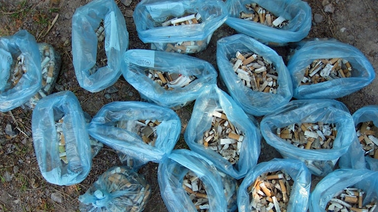 Cirka 3 500 cigarettfimpar i blå påsar.