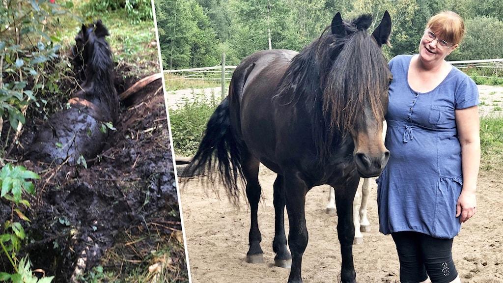 En häst som fastnat i ett kärr och en häst bredvid en person.