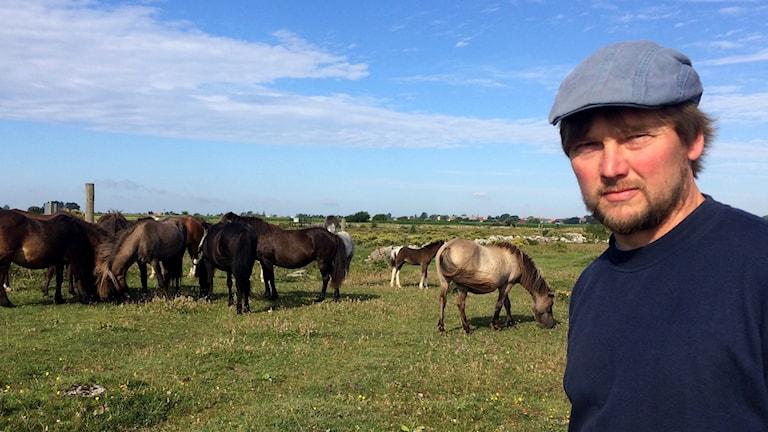 Johan Larssen, hästföretagare, framför sina hästar på en äng