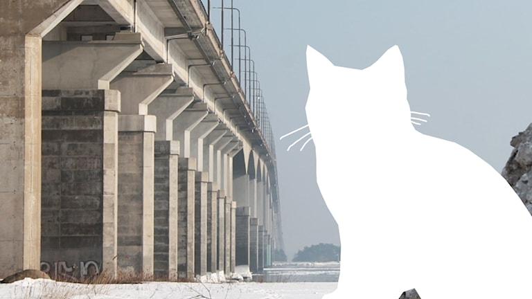 Katt-siluett och Ölandsbron.