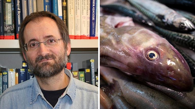 Sture Hansson bredvid fiskar.