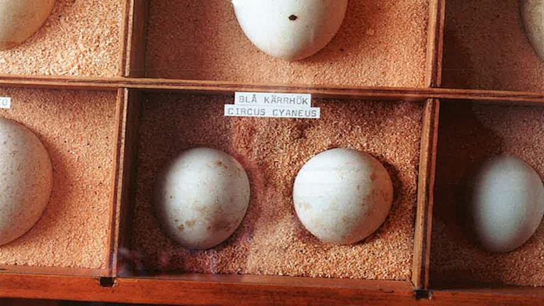 Bild ur förundersökningen på äggen.