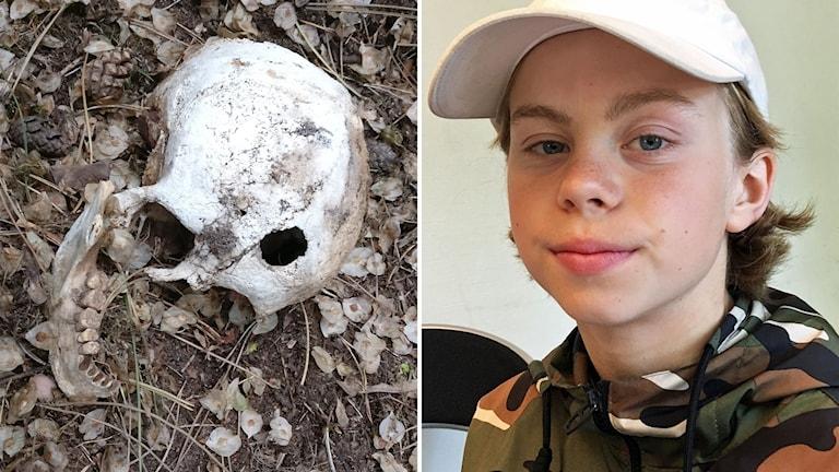 Kraniet som hittades på Laboratorieholmen och David Rosenqvist