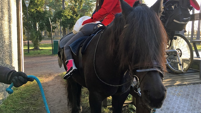 Hästen Hebbe går snart i pension. Han har under många år varit ridhäst för barn med funktionshinder.