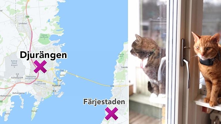 Karta över Kalmar och Färjestaden och en bild bredvid på två katter som sitter på varsin sida av ett fönster.