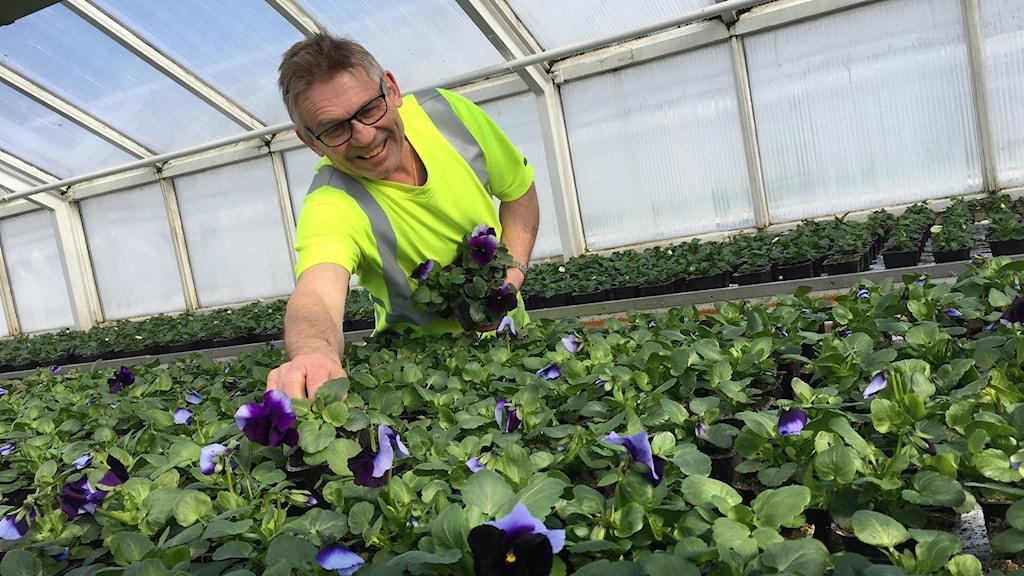 Christer Werner från Kalmar kommun i ett växthus
