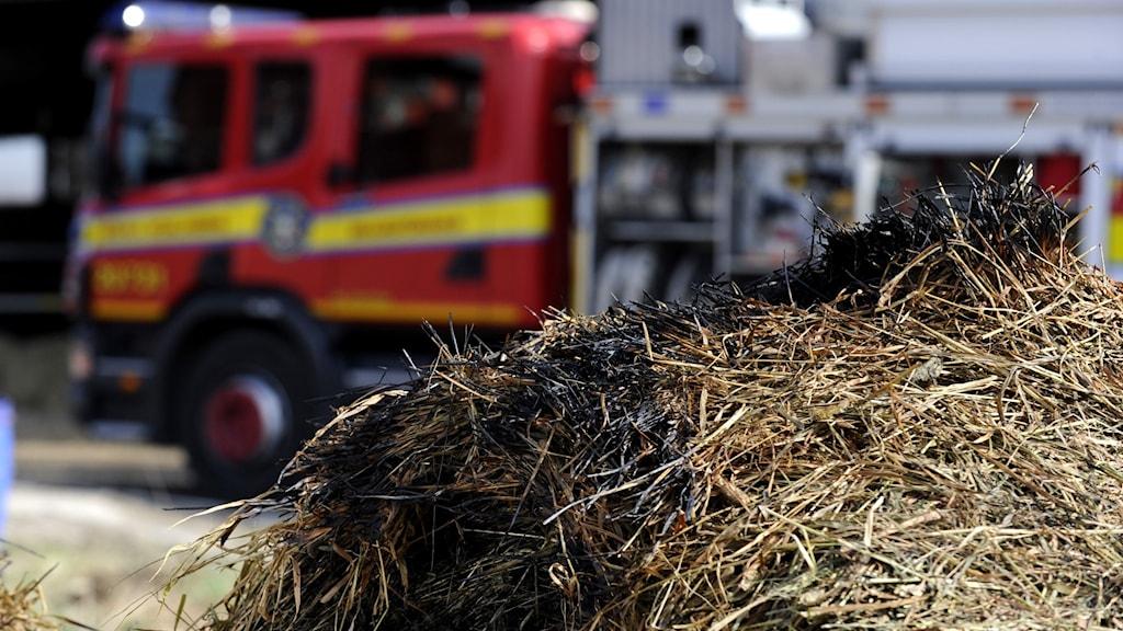 bränt gräs och brandbil