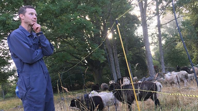 Daniel Hägerby lanbrukare och får