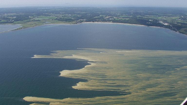 Flygbild över algblomning utanför Öland.