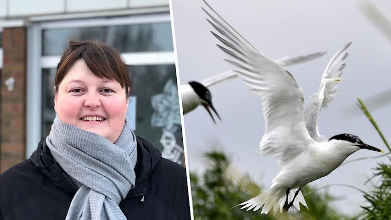 Till vänster en bild på en kvinna med halsduk och till höger en vit fågel.