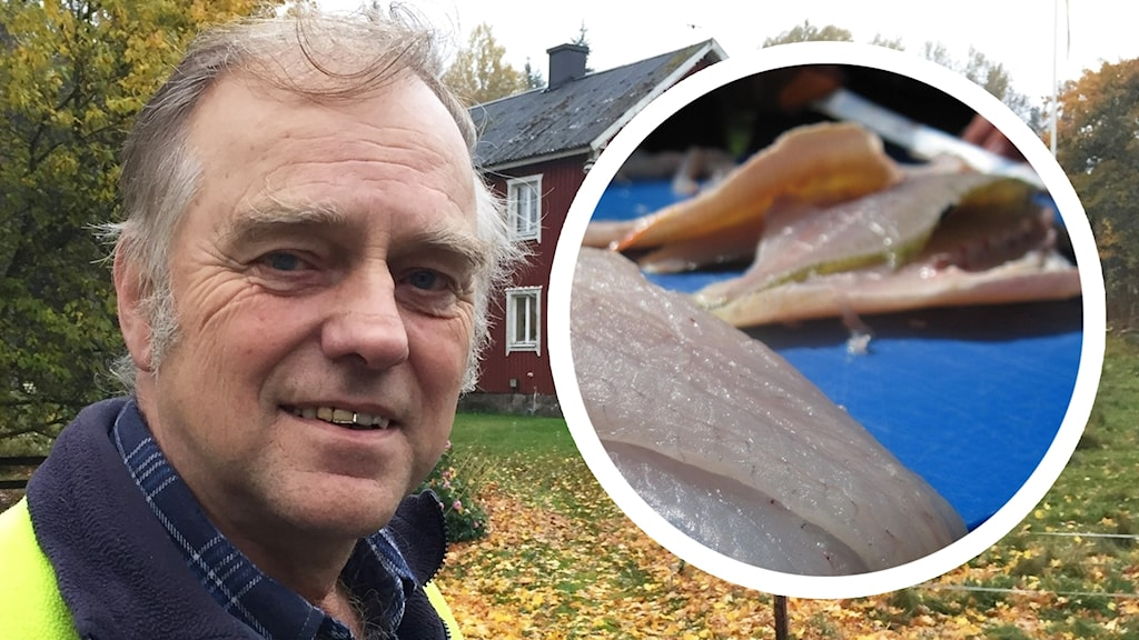 Åke Olsson och en bild på abborrar.