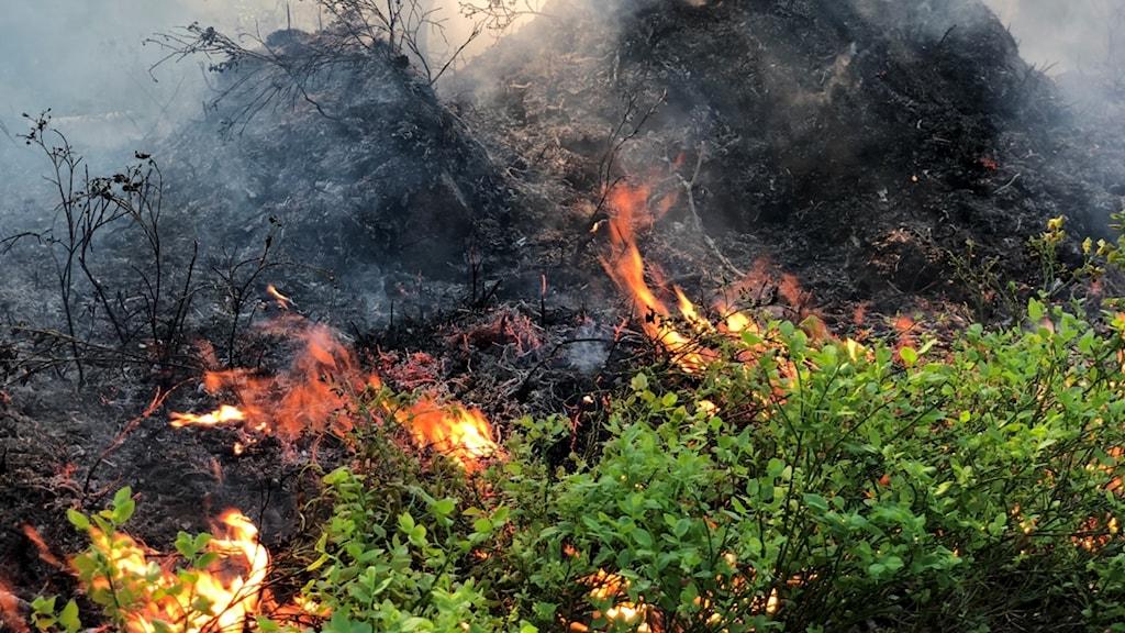 Brand i skog.