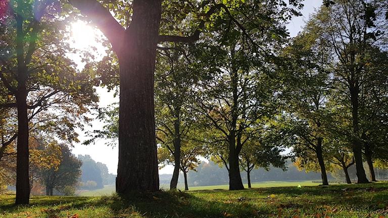 Lövträd och solsken.
