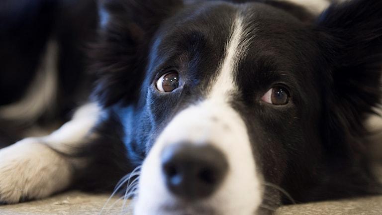 Genrebild: Den anställda på gruppboendet lämnade sin arbetsplats för att rasta sina hundar. Nu varnas den anställda.