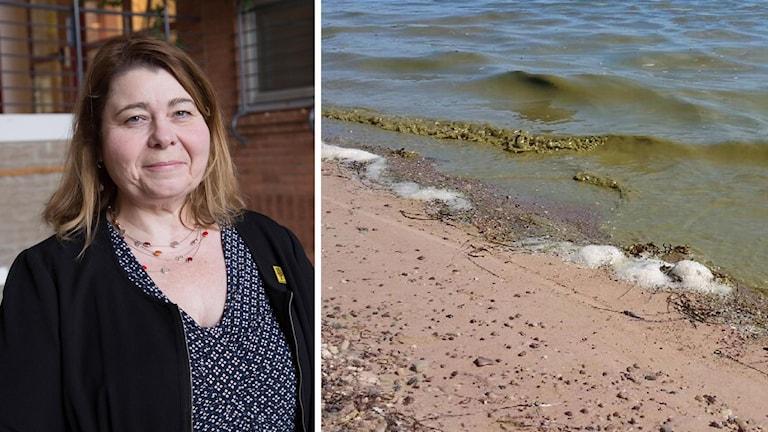 Kvinna och bild på algblommning.