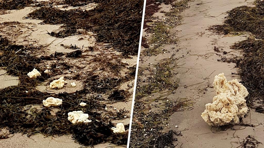 Vita klumpar som ligger på en strand.