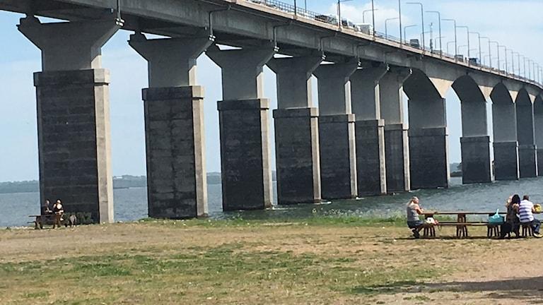 Köer på Ölandsbron Kristi Himmelfärdsdag 2017