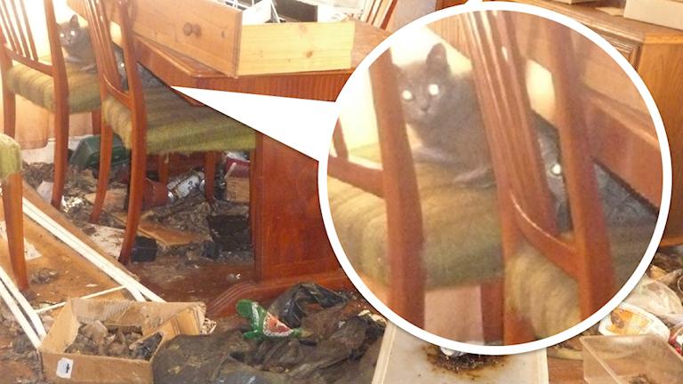 Bild på katter i ett smutsigt rum.