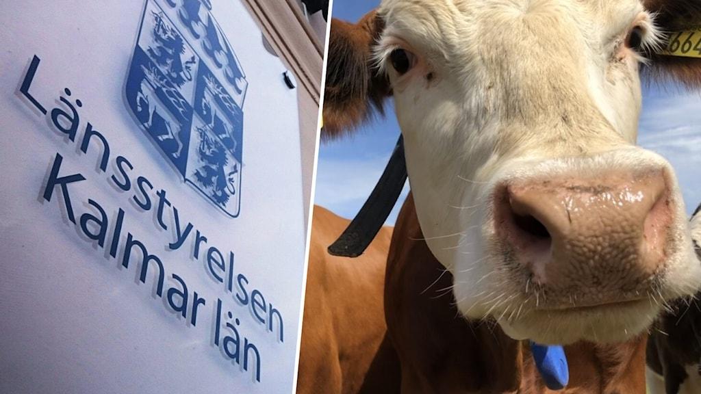 Länsstyrelsens logga och en ko.