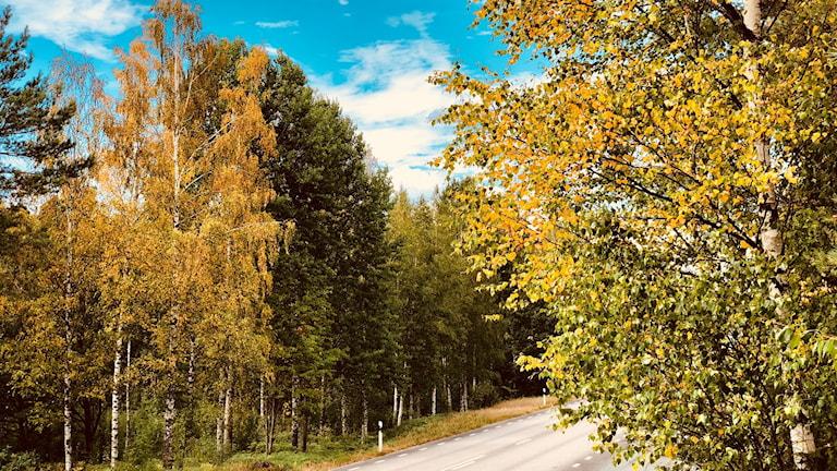 Träd med löv i höstens färger.
