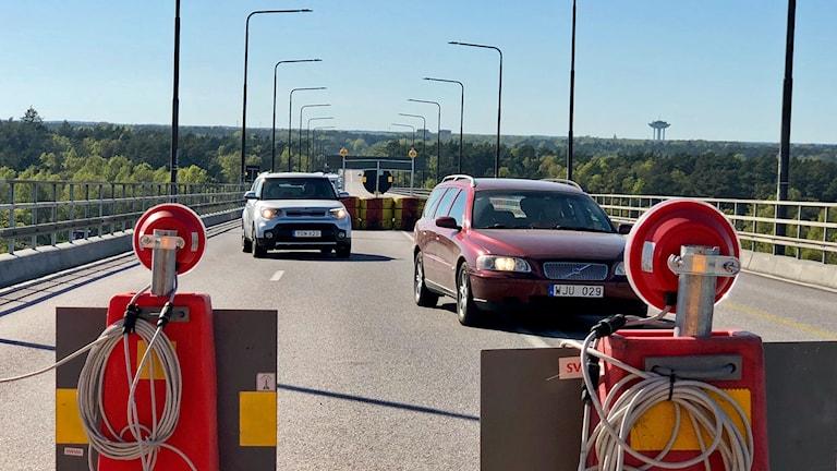Köer på Ölandsbron, högbrodelen.