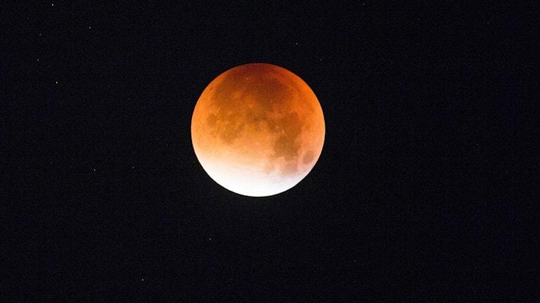 Superblodmåne. Foto: Solum, Stian Lysberg/NTB scanpix.