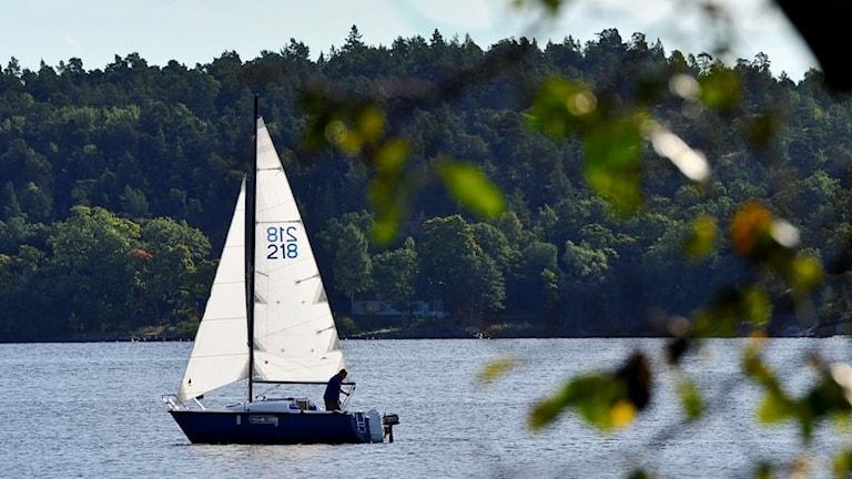 Segelbåt vid Lidingö i september. Foto: Anders Wiklund/TT (arkivbild)