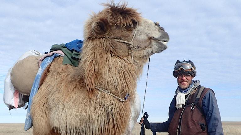 Marmorbybon Christian Bodegren håller i den stora kamelen Goliat