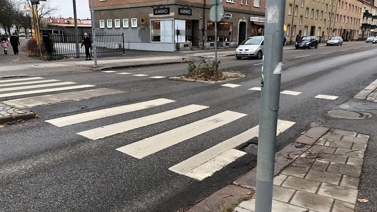 Övergångsställe med cykelöverfart. Foto: Tobias Danielsson/Sveriges Radio.