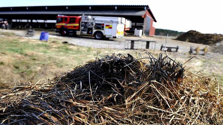 Gräsbrand och brandbil. Foto: Pontus Lundahl/Scanpix.