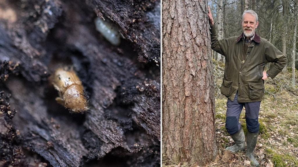 Man står vid ett träd, i en skog