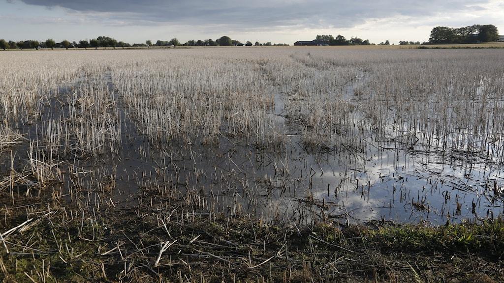 Hundratals bönder vid Mälaren har drabbats av översvämningar