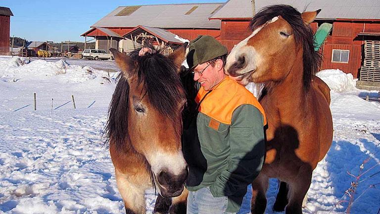Mats Tobiasson från Runtuna står i hästhagen med två hästar. Foto: Michael Berwick/Sveriges Radio Sörmland.