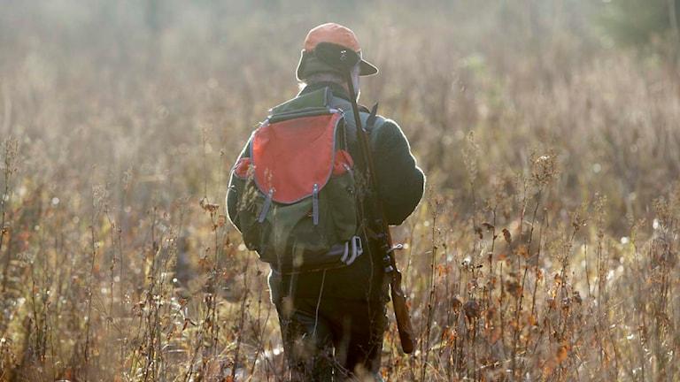 En jägare vandrar i markerna. Foto: Fredrik Sandberg/Scanpix.