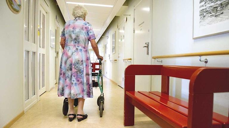 Äldre kvinna med rollator går i en korridor.  Foto: Jessica Gow/Scanpix