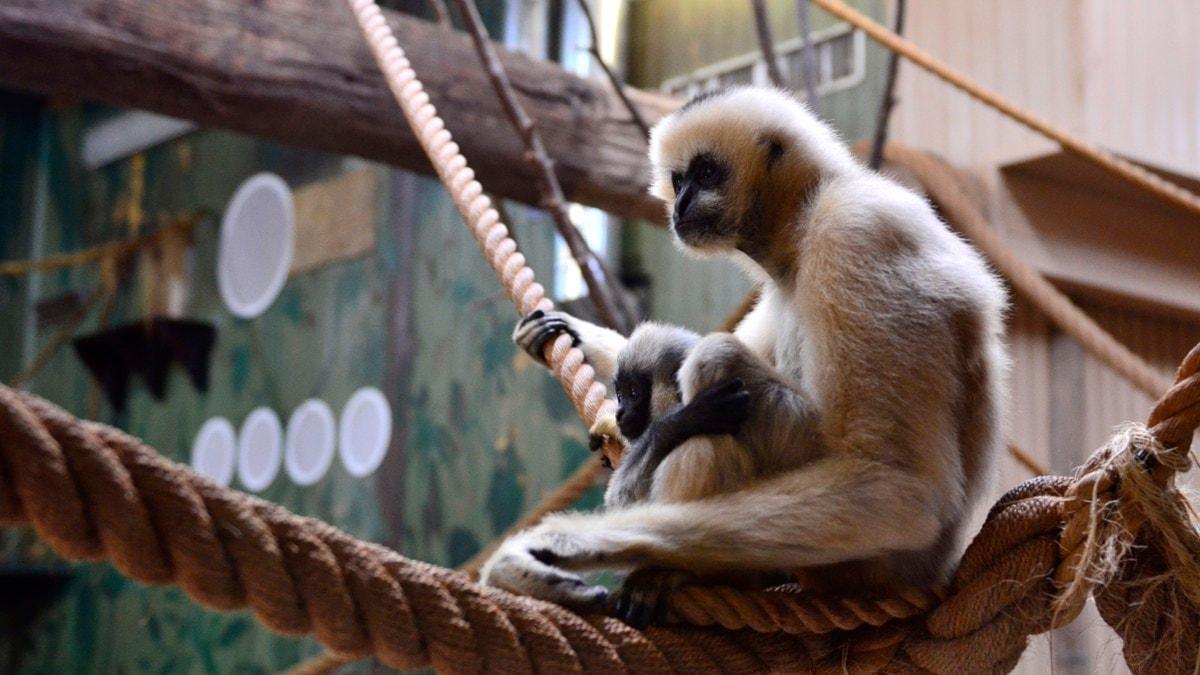 Zoo Kritik