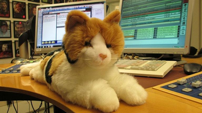 En konstgjord katt ligger på studiobordet Foto: Johanna Jennische/P4 Sörmland