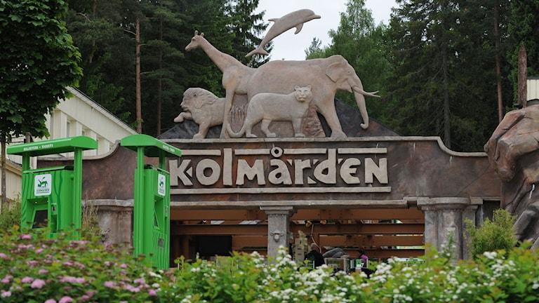Kolmårdens djurpark, entré. Foto: Pontus Stenberg/TT.