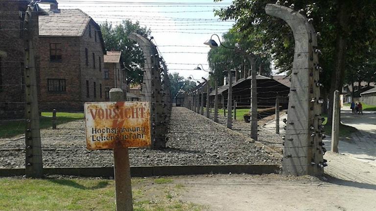 Auschwitz 1. Foto: Fredrik Blomberg