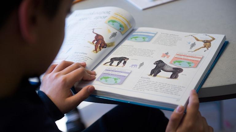 Barn läser bok. Foto: Fredrik Sandberg/TT.