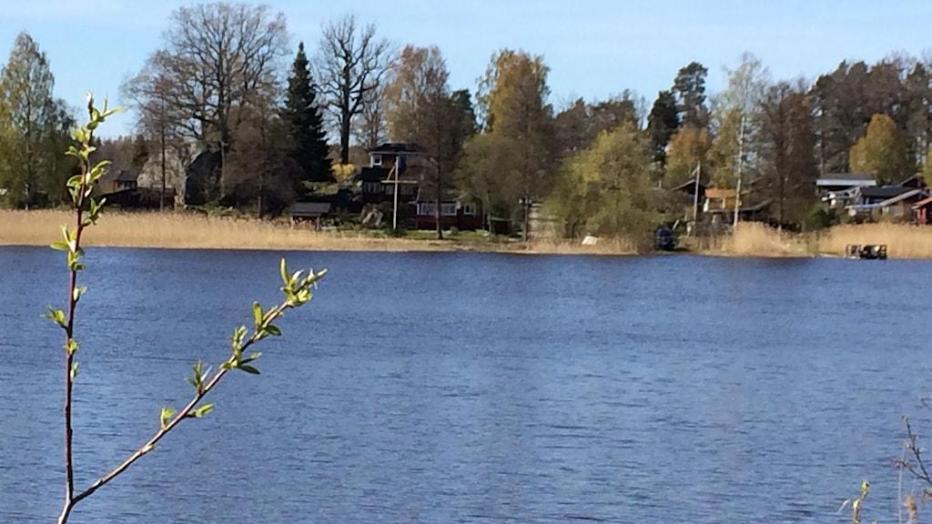 Sjön Orrhammaren i Flen. Foto: Katarina Wahlström/Sveriges Radio.