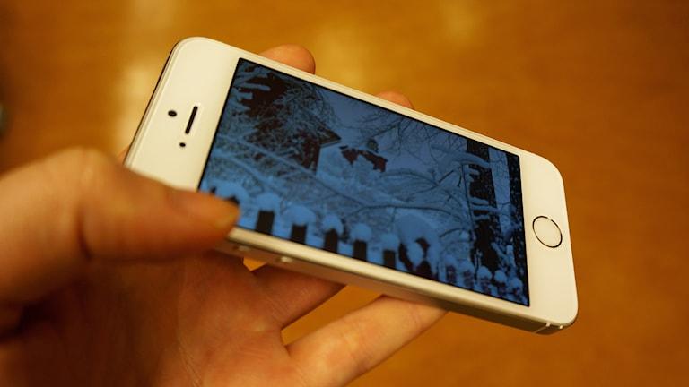 Ett foto i en mobilkamera. Foto: Katarina Larsson/Sveriges Radio.