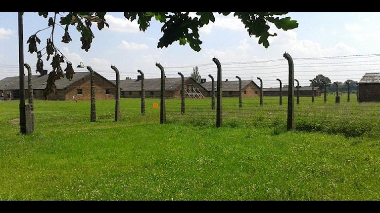 Inifrån Auschwitz-Birkenau i Polen. Foto: Fredrik Blomberg/Sveriges Radio.