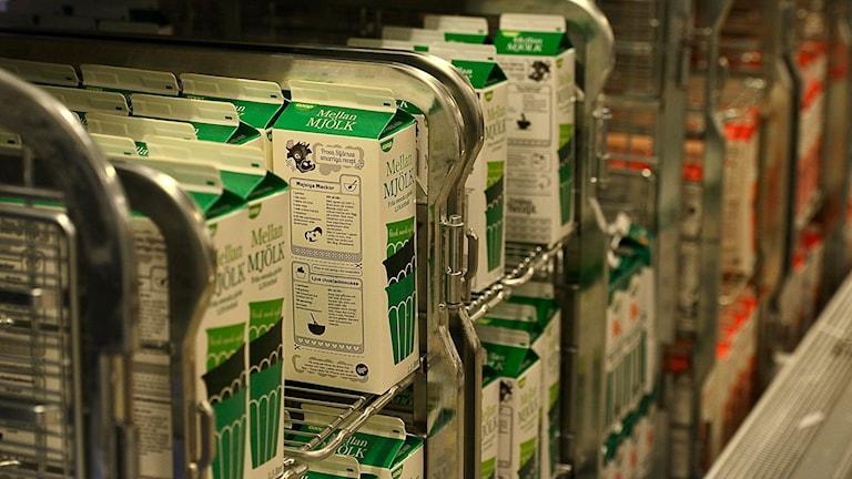 Mjölkförpackningar. Foto: Per Thyrén/Sveriges Radio.