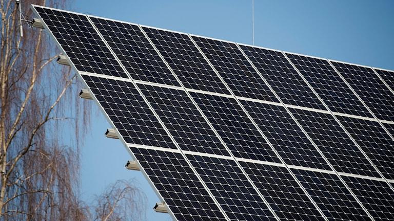 En panel med solceller. Foto: Fredrik Sandberg/TT.