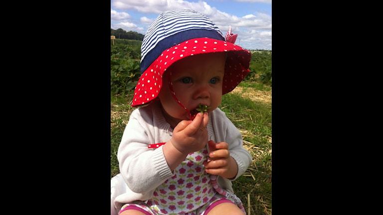 Litet barn i jordgubbslandet. Foto: Robert Karlsson.