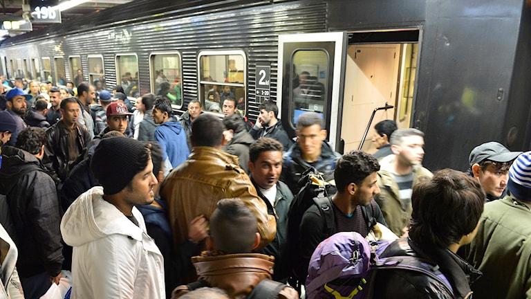 Flyktingar intill ett tåg på Centralstationen i Stockholm. Foto: Jonas Ekströmer/TT